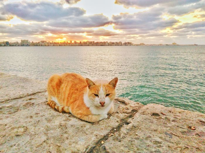 One Animal Pets Domestic Cat Domestic Animals Looking At Camera Nature Animal Themes Feline Portrait Mammal Sky Tabby Cat No People Cloud - Sky Outdoors Water Day Reflection Sea Alexandria