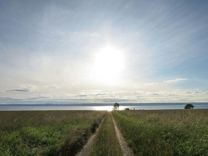 Landscape Cycling Evening Sky Evening Light Sunshine True Summer Rönäs Path