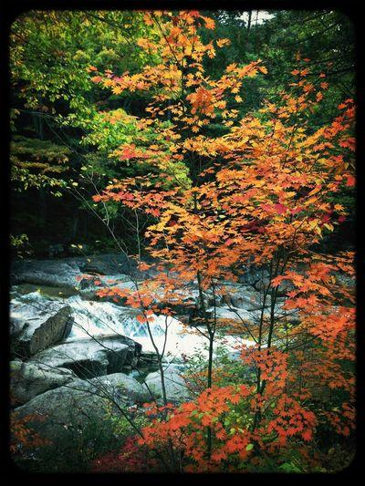 紅葉狩り第一弾、美しい。