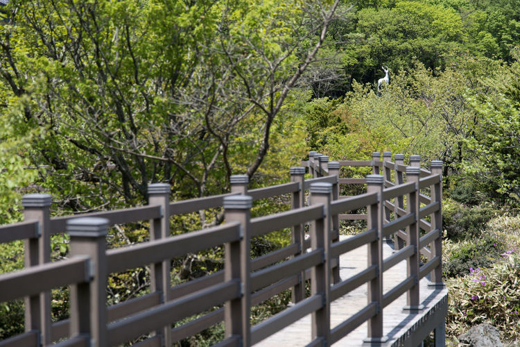 View at 1100m altitude of Hallasan Mountain in Jeju Island, South Korea 1100m Altitude Animal Themes Bird Branch Day Hallasan Mountain JEJU ISLAND  Nature No People Outdoors Tree