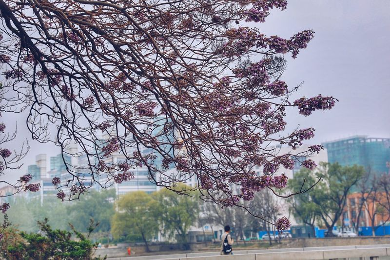 Tree Nature Flower EyeEm Best Shots EyeEm Enjoying Life EyeEm China