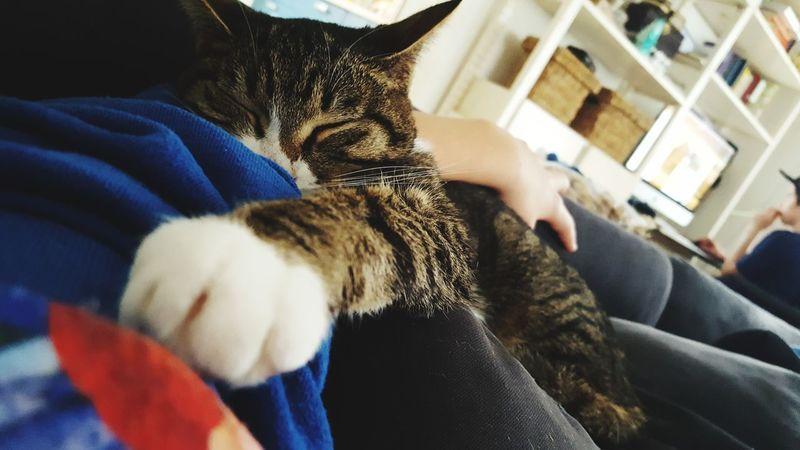 😸😻 Pets Kitty Kitten Love Sleepy Kitty