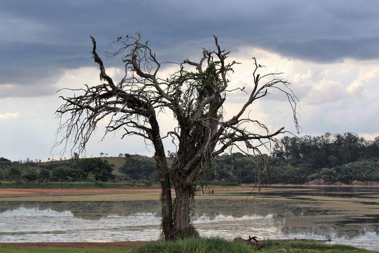 Tree Water Flood Lake Storm Cloud Sky Landscape Cloud - Sky