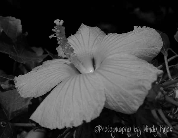Black & White Photography Blackandwhite Bigislandhawaii Taking Photos Hanging Out Enjoying Life Bigislandlove Love HugsAndKisses Livelifetoitsfullest BeCreative Positivity KOOL Followme ILikeItAlot Loving Life! Enjoying Life Volcanohawaii CreativePhotographer Bigisland Godsbeauty Godsgifts Godscreation Mahalo Nui Loa NatureAtItsBest