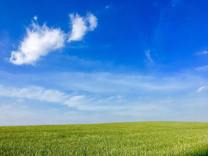 Field Agriculture Sky Nature Growth Blue Beauty In Nature Landscape Farm No People Scenics Crop  Tranquil Scene Tranquility Cloud - Sky Grass Rural Scene Day Outdoors Green Color