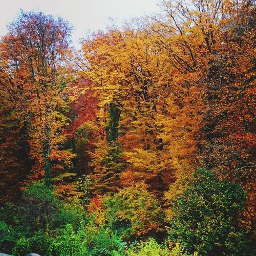 Autumn Colors Traveling France What Does Peace Look Like To You?
