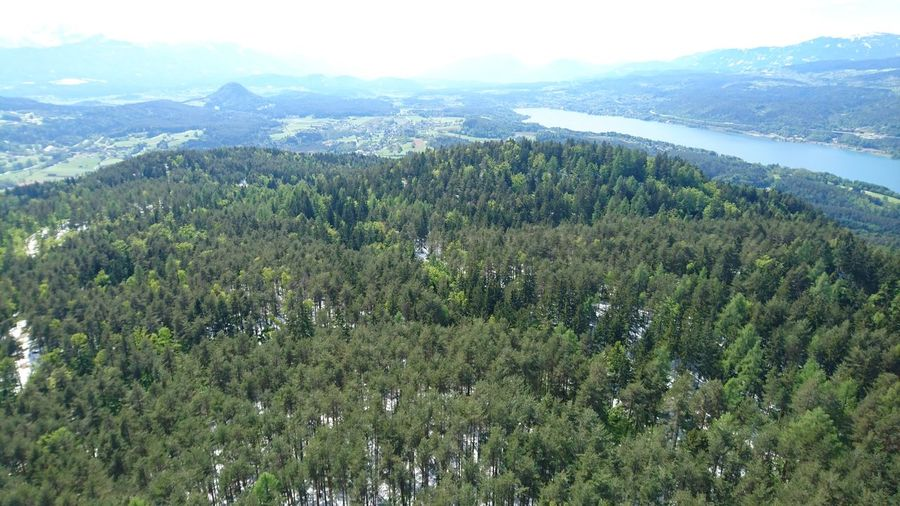 View from the Pyramidenkogel-tower in carinthia, Austria Winter Snow Forest Trees Nature No People Landscape Aerial View Green Color High Angle View Tree Shades Of Winter
