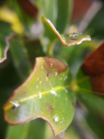 Leaf Nature Wet