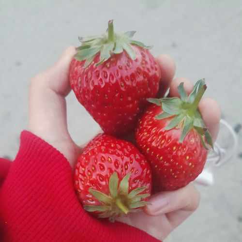 Cropped Hand Holding Strawberries