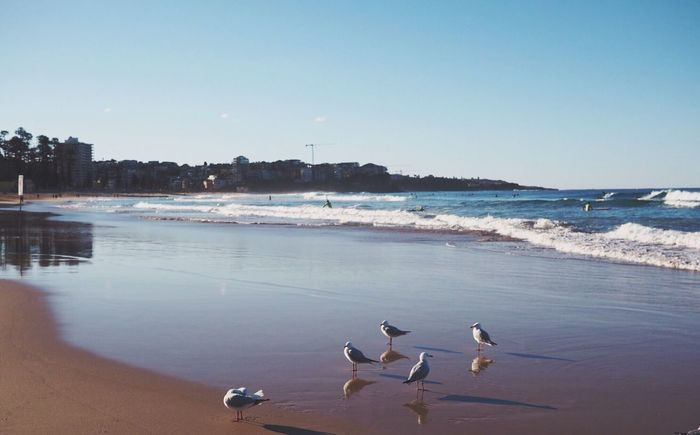 Water Beach Sea Animals In The Wild Bird Animal Themes Nature Clear Sky Beauty In Nature No People Sand Outdoors Scenics Animal Wildlife Day Seagull Wave Horizon Over Water Large Group Of Animals Sky