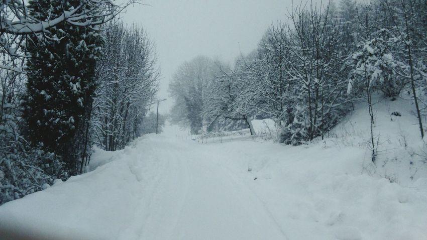Snow Fall ❄
