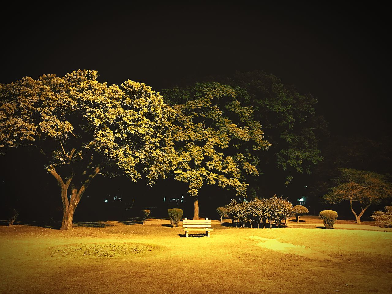 tree, nature, growth, beauty in nature, park - man made space, tranquility, tranquil scene, branch, no people, scenics, landscape, outdoors, night, illuminated, grass, sky