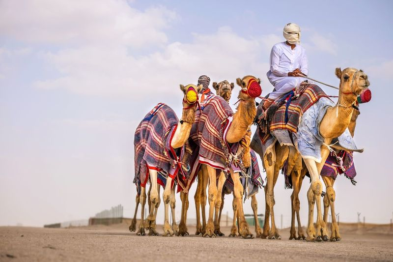Herders with camels in the desert