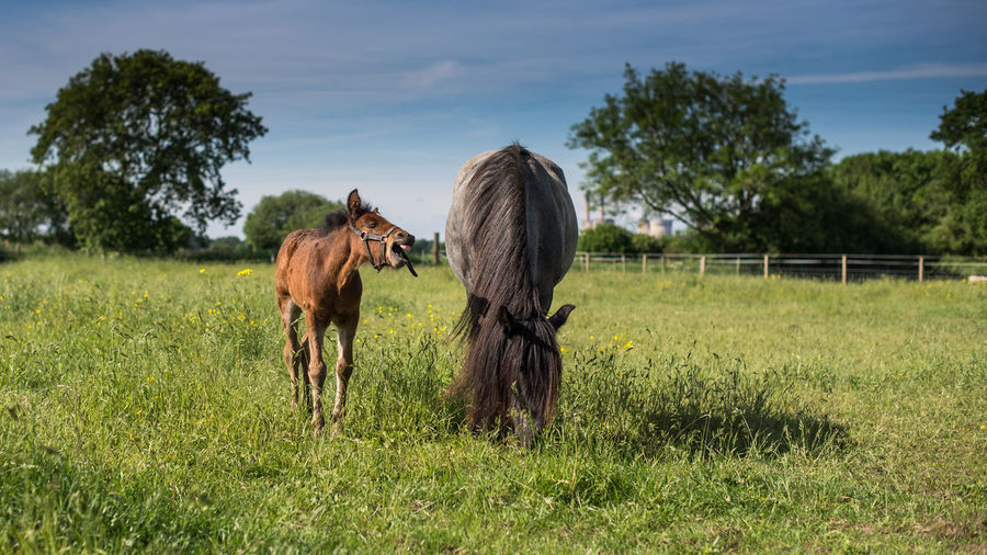 mare and foal grazing on a beautiful spring day.. Animal Themes Beauty In Nature Domestic Animals Field Foal Foal And Mare Foal In Field Grass Horse Horse Life Horse Photography  Horses Livestock Mammal Mare No People