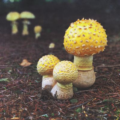 Mario Top Fungus Growth Land Mushroom Field Toadstool Nature Outdoors