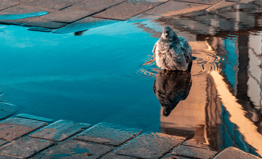 High angle view of bird in swimming pool