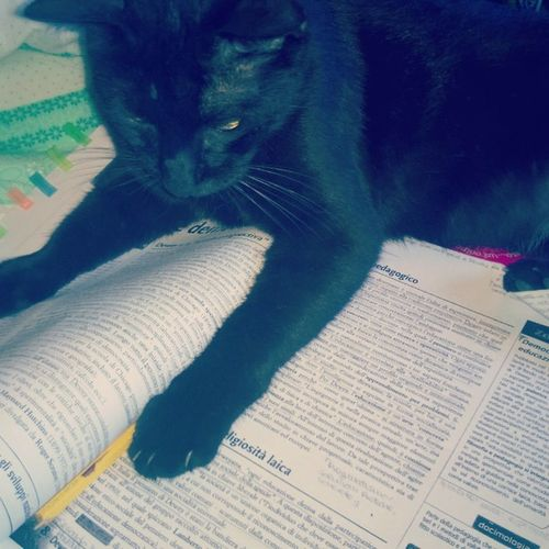Il mio gatto ha deciso che non devo studiare più.. Pulce Pulcepassionelibri Pulcerompipalle Gattobello Gattonero Stanca Pedagogia Dewey Sonno Voglioandareahonolulo Bästa Maturità2015 Hairottoilcazzo Bastastudio Bastascuola 59euncalcioinculo Bastachemeneesco