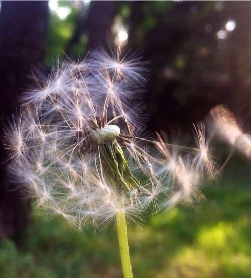 Flower Nature Moment Kratovo