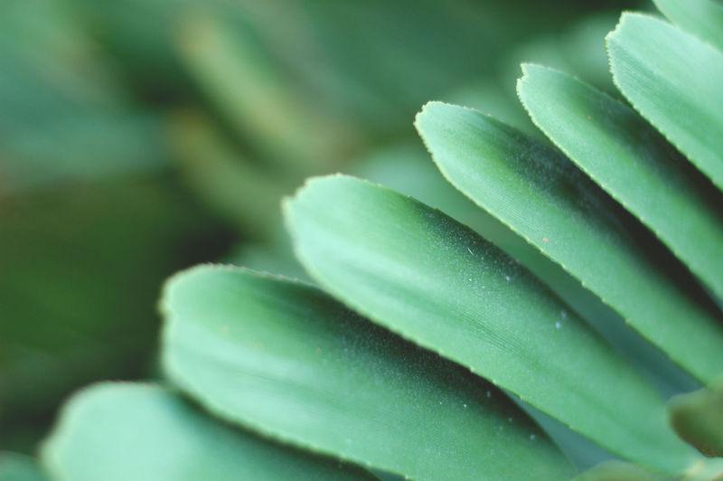 Garden Leaf