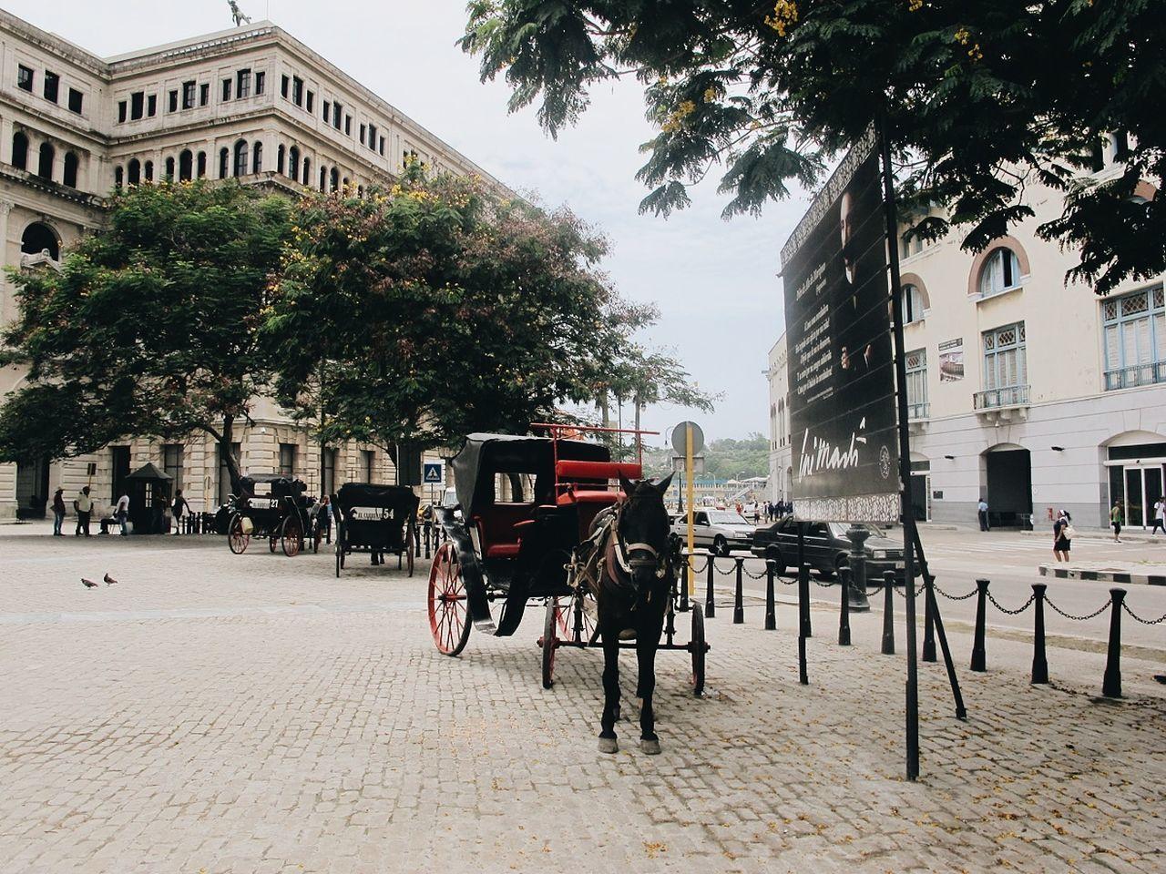 Horsedrawn On Street In City