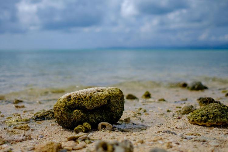 Coral on beach against sky