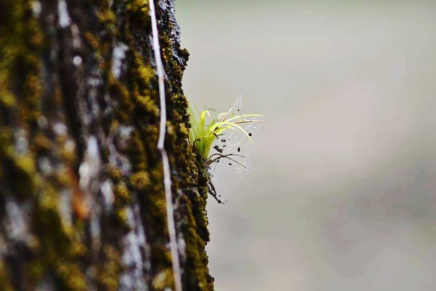 Check This Out Nature GREEN LIFE