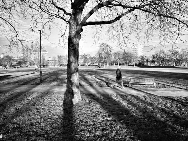 At the park Tree Real People Outdoors Leisure Activity Nature One Person Men Sky Day 3XSPUnity City Life Black And White Light
