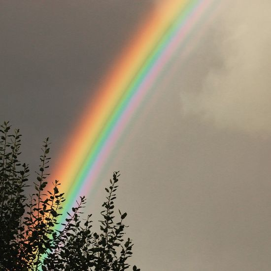 Low angle view of rainbow over trees against sky