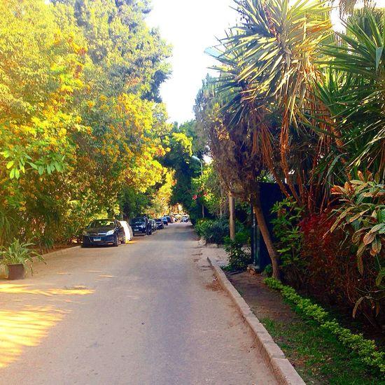 Tree Maadi Green