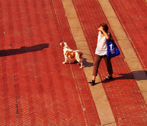 Walking Around Eye4photography  EyeEm Best Shots Streetphotography People Watching I Love My Dog Summer I Heart New York From My Point Of View Bethesda Fountain, Central Park, NYC My Brittany Spaniel Patty 's first visit to Central Park. The City Light