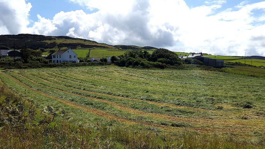 Grass Green Beauty In Nature No People Nothern Ireland  Ballintoy Tea Crop Rural Scene Agriculture Cereal Plant Field Crop  Cultivated Land Farm Sky Landscape Grassland