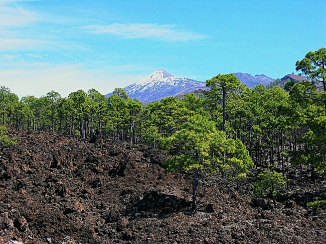 Mountain Tree Tranquil Scene Beauty In Nature Sky Tenerife. Canary Islands Teide Volcano