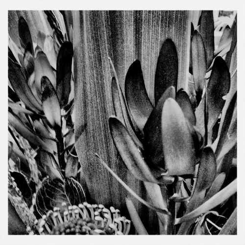 Taking Photos IPhoneography Sydney Iphoneography Blackandwhite