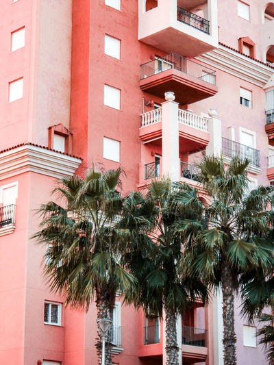 Palms and apartments Tall Building Apartments Apartment Block SPAIN Mediterranean  Subtropical Tree Apartment City Window Façade Residential Building Architecture Building Exterior Built Structure Palm Tree Palm Frond Palm Leaf Tropical Tree Tropical Climate Housing Development Building Story Balcony Residential Structure