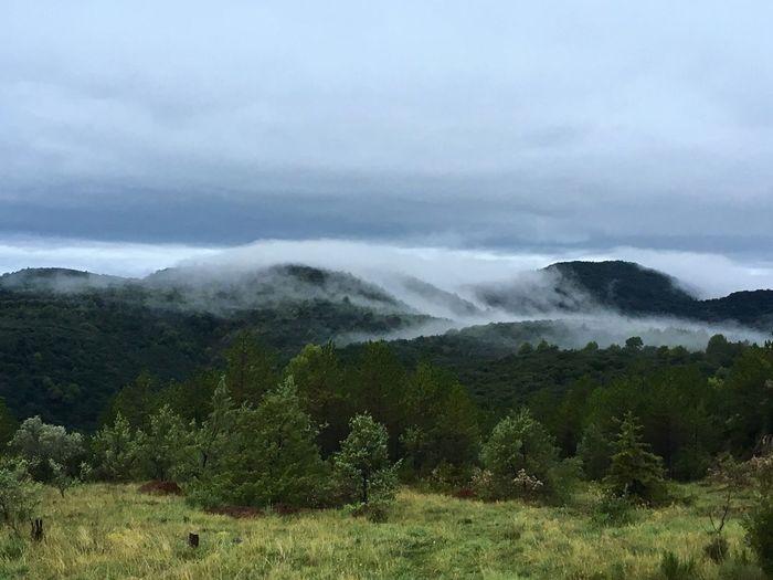 Pretty foggy