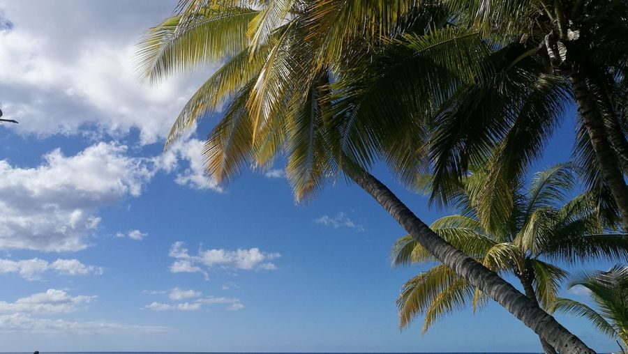 Carribean Martinique Le Coin Tree Branch Palm Tree Blue Sky Green Color