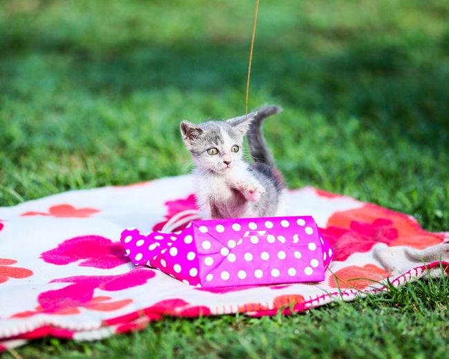 Kitten by bag on picnic blanket at park