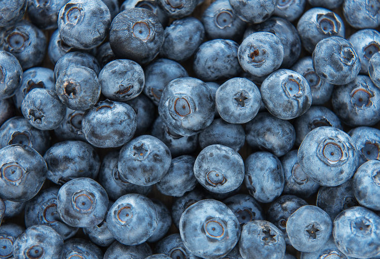 Freshly picked blueberries as a natural food background. concept for healthy eating