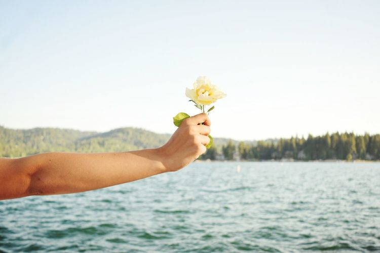 Cropped Hand Holding Flower By Lake
