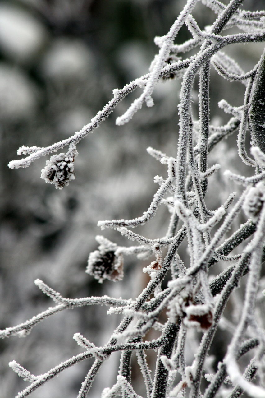 winter, cold temperature, snow, frozen, weather, nature, focus on foreground, ice, frost, day, plant, outdoors, no people, beauty in nature, close-up, fragility, growth, snowflake, branch, freshness