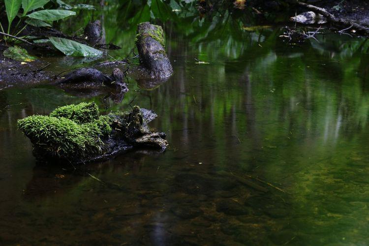 今日は熱い1日になるのかな~ Ndfilter Beauty In Nature Nature Photography Eyeem Photography EyeEm Nature Lover Nature EyeEm Gallery EyeEm Best Shots おはよう~😊