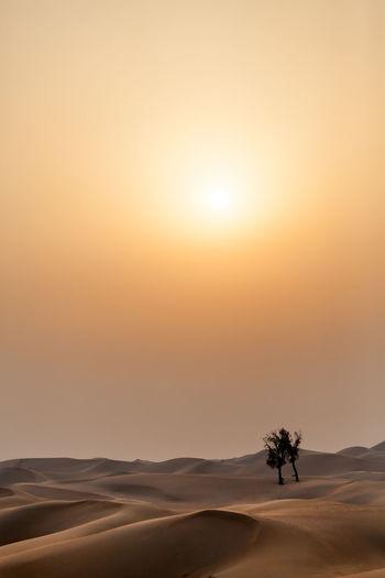 Sunset in the desert with lonely trees, UAE Travel UAE UAE , Dubai Arid Climate Beauty In Nature Climate Desert Environment Land Landscape Nature No People Non-urban Scene Outdoors Plant Scenics - Nature Sky Sun Sunlight Sunset Tranquil Scene Tranquility Travel Destinations Tree Uae,abudhabi