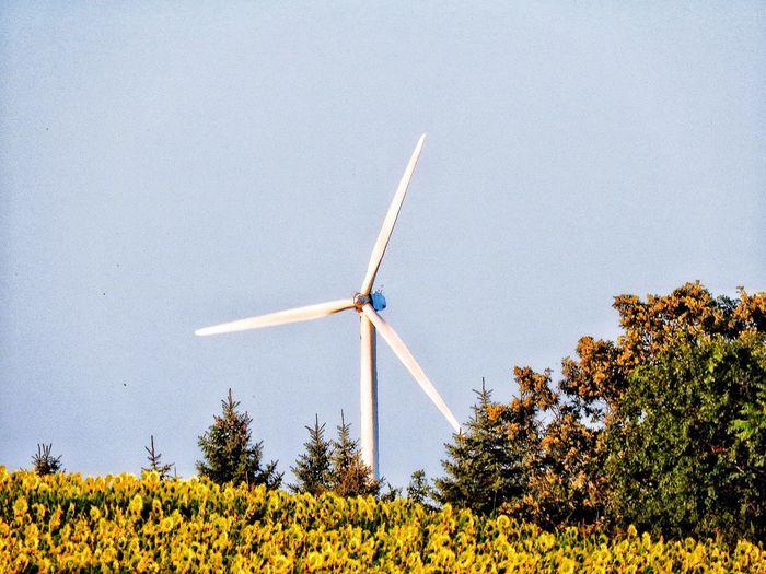 Windmill on farm