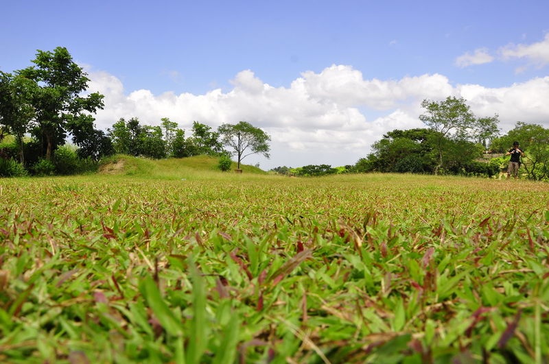 Close-up of grass growing on land