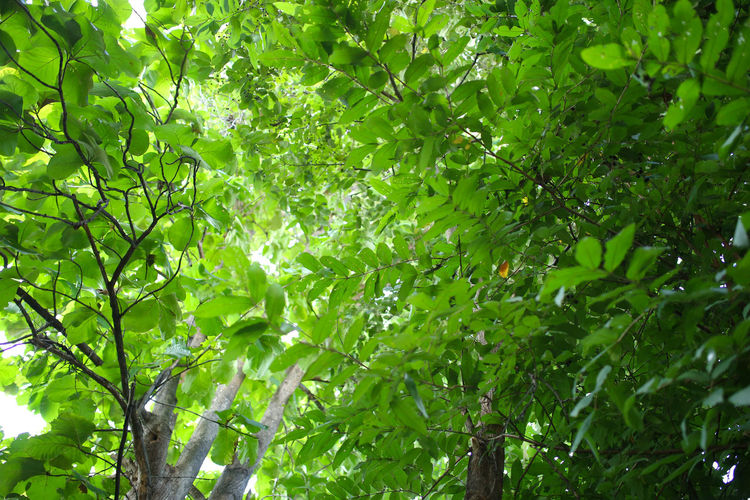Green leaf. Backgrounds Beauty In Nature Full Frame Green Color Growth Leaf Nature Outdoors Plant Plant Part Sunlight Tree
