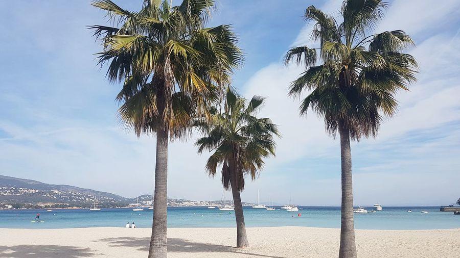 Palmanova Mallorca Balearic Islands SPAIN Setting Afternoon Tropical Tree Horizon Coastline Island