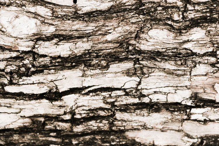 abstarct wood bark texture, focus sective Abstract Art Bark Blur Blurry Closeup Crack Design Dry Frame Graphic Grey Natural Pattern Nature Object Old Pattern Plant Rough Surface Texture Textured  Tree Tree Bark Wood