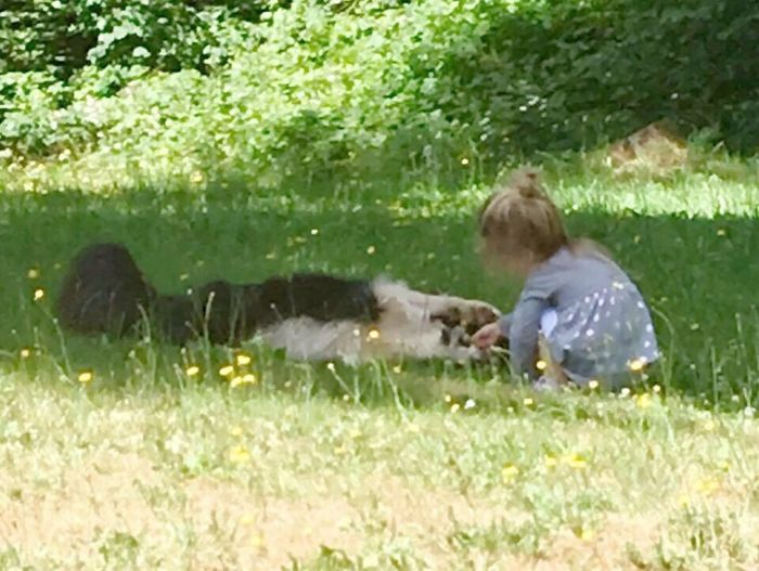 EyeEmNewHere EyeEm Animal Lover EyeEm New To Photography Outdoors Summertime Smell My Flower Togetherness Puppy Love Dogs And Kids He's So Patient Sweet Green Color Grass Domestic Animals Pet Portraits Modern Love