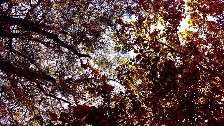 Tree canopy!