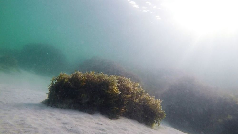 Diving Sea Seaweeds Nature Seaview